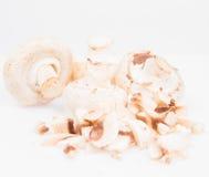 Rozrasta się agaricus Zdjęcie Royalty Free
