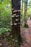 rozrasta się drzewa Obrazy Royalty Free