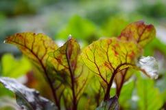 Rozsada rośliny w garnkach i tacach na nadokiennym parapecie Selekcyjna ostrość fotografia stock