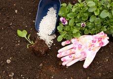 Rozsady kwiaty Astra i altówka na tle ziemia i użyźniacze Fotografia Royalty Free