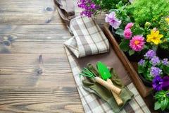 Rozsady ogrodowe rośliny i kwiaty w flowerpots Łopata, świntuch, rękawiczki i fartuch, fotografia royalty free
