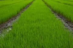 Rozsady w zielenieją pole zdjęcie stock