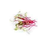 Rozsypisko ćwikłowy mikro zielenieje na białym tle Zdrowy łasowania pojęcie świeży ogrodowy produkt spożywczy organicznie r jako  Obraz Royalty Free