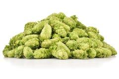 Rozsypisko świezi zieleń chmiel odizolowywający na białym tle Fotografia Stock