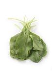 Rozsypisko azjatykci organicznie szpinak odizolowywający na bielu Obraz Royalty Free
