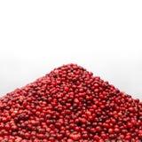 Rozsypisko cranberry Zdjęcie Royalty Free