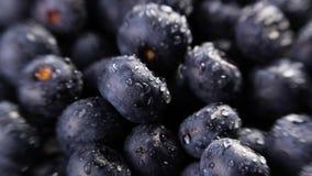 Rozsypisko czarne jagody zbiory wideo