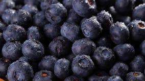 Rozsypisko czarne jagody zdjęcie wideo