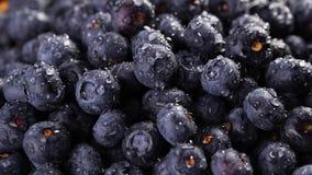 Rozsypisko czarne jagody zbiory