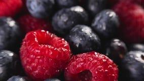 Rozsypisko czarne jagody i malinki zbiory