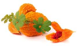 Rozsypisko gorzki momordica z liśćmi odizolowywającymi na białym tle lub melon Zdjęcie Stock