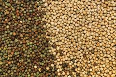Rozsypisko rolniczy uprawy ziarno jako tło Obrazy Stock