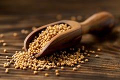 Rozsypisko surowi, nieprzerobeni musztardy ziarna nasiona w drewnianej miarce dalej, Zdjęcia Royalty Free