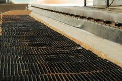 Rozsypisko właśnie zbierająca kukurudza wśrodku zbiornika Adra polany f Obrazy Stock
