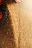 Rozsypisko właśnie zbierająca kukurudza wśrodku zbiornika Adra polany f Zdjęcia Royalty Free