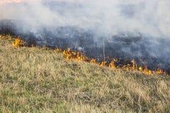 Rozszalali lasowi wiosna ogienie P?on?ca sucha trawa, p?ocha wzd?u? jeziora Trawa pali w ??ce Ekologiczny catastrophy zapali? ogi zdjęcie stock