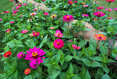 Rozszczepiony Sztachetowy ogrodzenie i kwiaty Obraz Stock