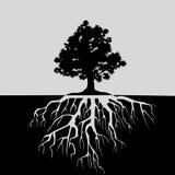 Rozszczepiony widok dębowy drzewo i swój korzenie Czarny i biały ilustracja ilustracji