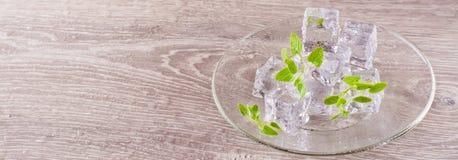Roztapiające kostki lodu i nowi liście na spodeczku Zdjęcia Royalty Free