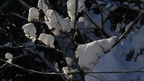 Roztapiający śnieg zbiory