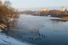 Roztapiający jezioro i kaczki w mieście Zdjęcia Stock