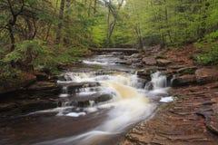 Roztoka Naturalny teren, Ricketts roztoki stanu parka PA fotografia royalty free
