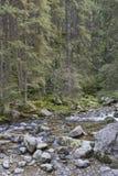 Roztoka Stream in Roztoka Valley. Tatra National Park. High Tatr Stock Images