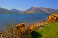 Roztoki coe góry z śniegiem nakrywali gór i kolorów żółtych kwiatów Loch Leven Lochaber Geopark Szkocja uk zdjęcia stock