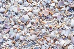 Roztrzaskani Seashells Fotografia Royalty Free