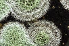 Rozwój zielona foremka na organicznie podstawie, abstrakcjonistyczny tło Zdjęcia Royalty Free