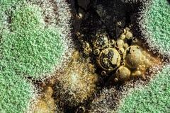 Rozwój zielona foremka na organicznie podstawie, abstrakcjonistyczny tło Zdjęcia Stock