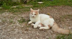 Rozważny kot Zdjęcia Stock