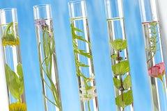 Rozwiązanie lecznicza roślina i kwiaty Obraz Stock