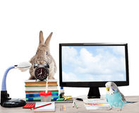 Rparrot, rabbit , alarm clock, computer Royalty Free Stock Image