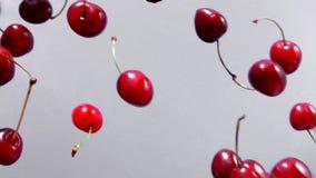 Rpe-Kirschen fliegen auf einen weißen Hintergrund stock footage