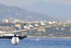 rpes seagulls Στοκ φωτογραφία με δικαίωμα ελεύθερης χρήσης