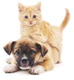 Rred kattunge i valp arkivfoto