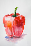 RRed pepper. Watercolor illustration of red pepper Royalty Free Stock Photo
