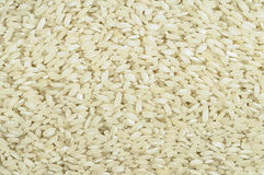 Rrice grain Stock Images