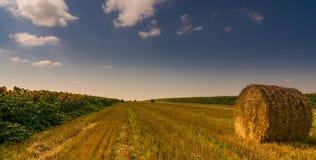Rround bal av sugrör i fältet Arkivbild