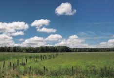 Rruralweiland op een de zomerdag Stock Foto's
