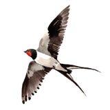 RSky fågelsvalor i ett isolerat djurliv vid vattenfärgstil royaltyfri illustrationer