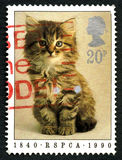 RSPCA Kitten UK Postage Stamp. GREAT BRITAIN - CIRCA 1990: A used postage stamp from the UK, depicting an image of a cute Kitten and commemorating the RSPCA Stock Photo
