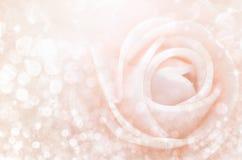 Résumé Les roses douces de couleur dans le bokeh donnent à la tache floue une consistance rugueuse molle Photographie stock libre de droits