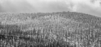 Rtanjberg in de winter 19 Royalty-vrije Stock Foto