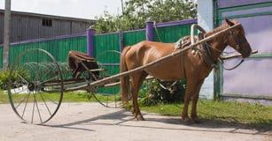 Râteau de cheval et de foin Photographie stock libre de droits