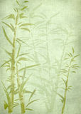 Rétro fond en bambou. Images stock