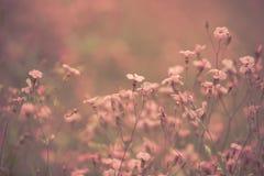 Rétro fond rose de fleurs Photos libres de droits