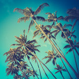 Rétros palmiers diagonaux en Hawaï Image stock