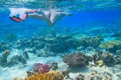 rött hav som snorkeling Arkivfoton